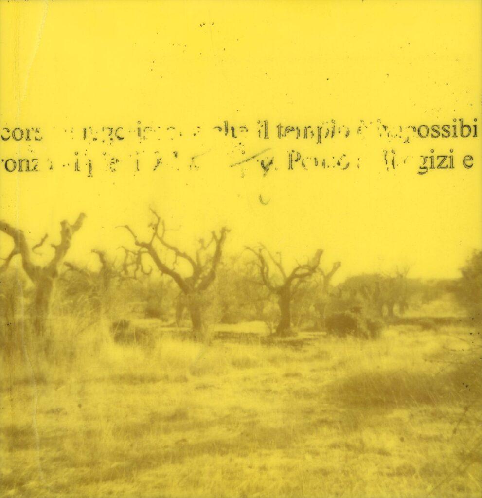 cristiano caggiula, narrazione di una catastrofe, alberi contagiati da xylella contagiosa.